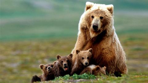 Медведи и одежда с принтами медведей